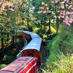 DAO-68819 嘉義縣,阿里山櫻花,阿里山,阿里山國家森林遊樂區,阿里山國家風景區,阿里山森林鐵道,櫻花鐵道,阿里山櫻花季,吉野櫻花季,森林火車,阿里山小火車,