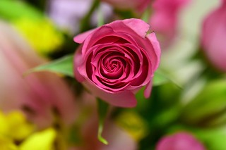 Mother's Day Rose and Bouquet | by slgckgc
