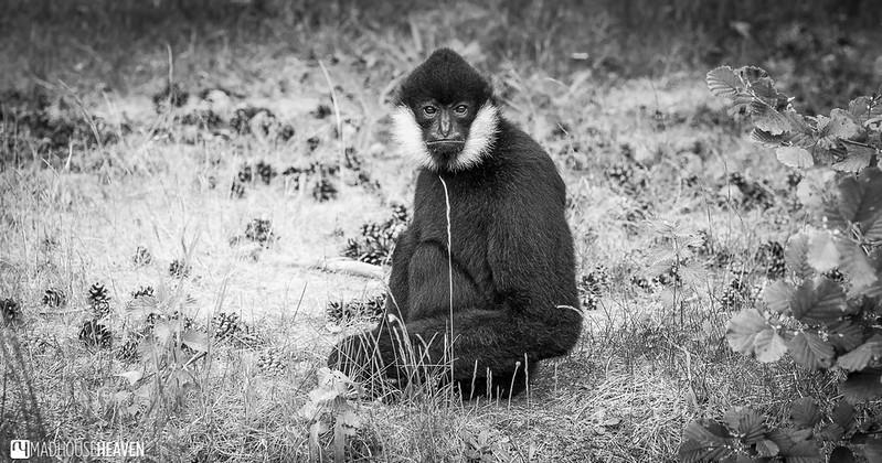 Safaripark Beekse Bergen - 0341