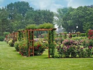 The Allentown Rose Garden Olympus Digital Camera Flickr