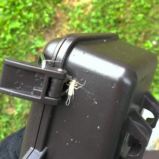White earwig trying to make the wildlife camera into his home #animalOSU