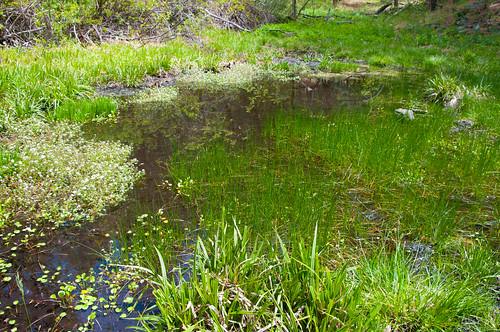 Dorsey Spring   by deborah.soltesz