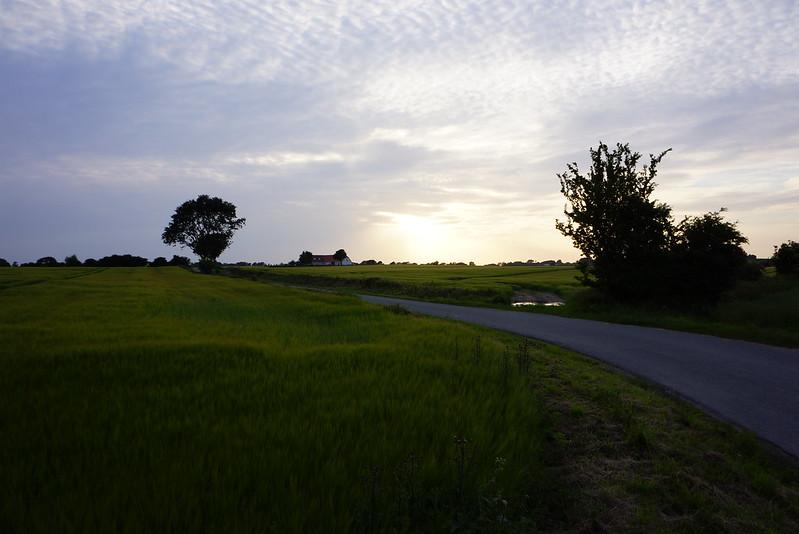 Kaedeby-Haver-2013-07-02 (2)