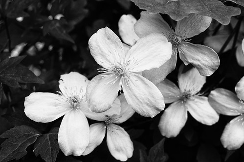 White Flowers (30/05/2016)