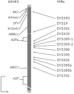 my genetic sequence | Type: Y-Chromosome Haplogroup: R1b (M3