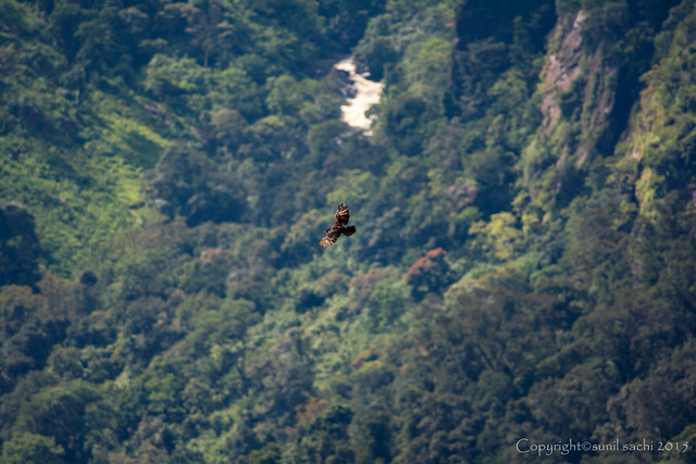 The Dream Gorge - Rufous bellied Hawk Eagle| Annaimalai Hills | Western Ghats.