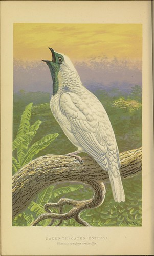 n61_w1150 | by BioDivLibrary