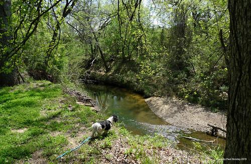 dog creek overlook