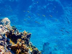 DCL March 2019 Tortola Underwater-105.jpg