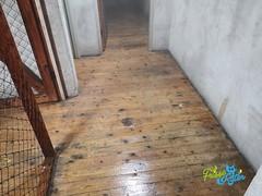 Duivenpoep schoonmaak / Pigeon dropping cleaning 38 - Schoonmaakbedrijf Frisse Kater