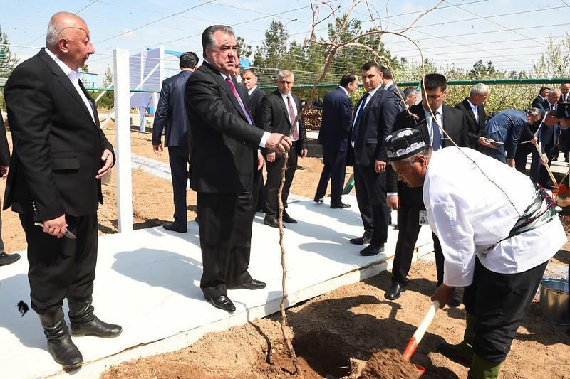 Лидер нации в Бободжон Гафуровском районе посетил Национальный парк «Вахдат», возвёл новый виноградник и суперинтенсивный сад
