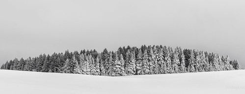 Une certaine symétrie hivernale | by JardinsLeeds