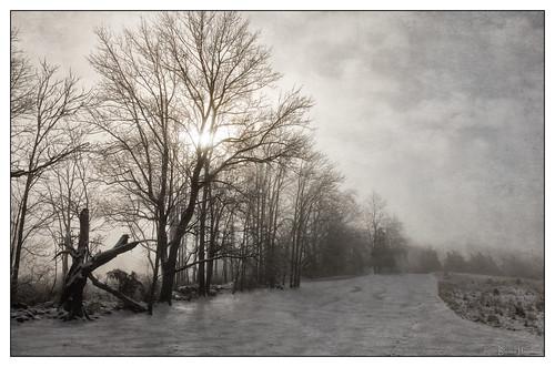 winter ice fog storm front yard cherrytree cherry tree driveway texture lenabemanna