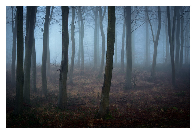 Friston Forest - February 22nd