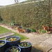 Spring gardening work has started.. by Finn Frode (DK)