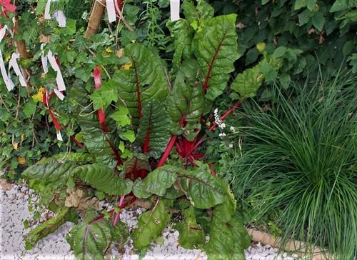 légumes et condiments décoratifs  32666774478_45deb79fdd