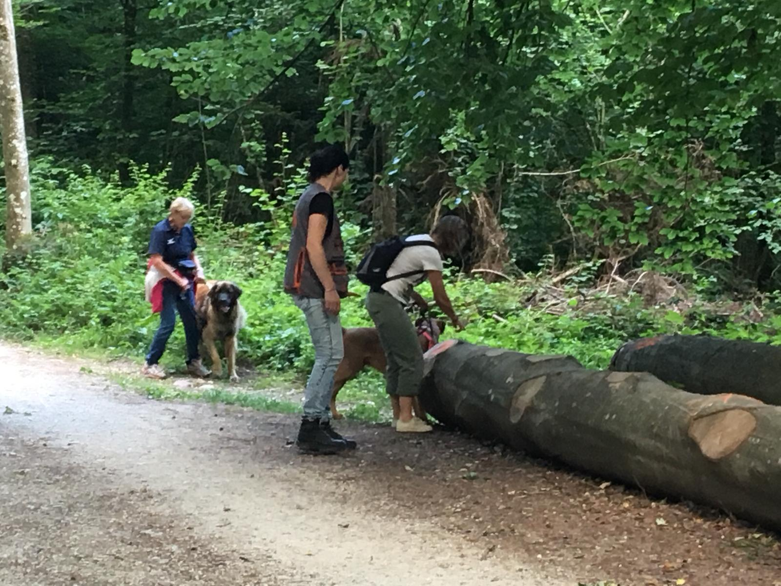 Trainingsimpressionen Familienhundegruppen 2018