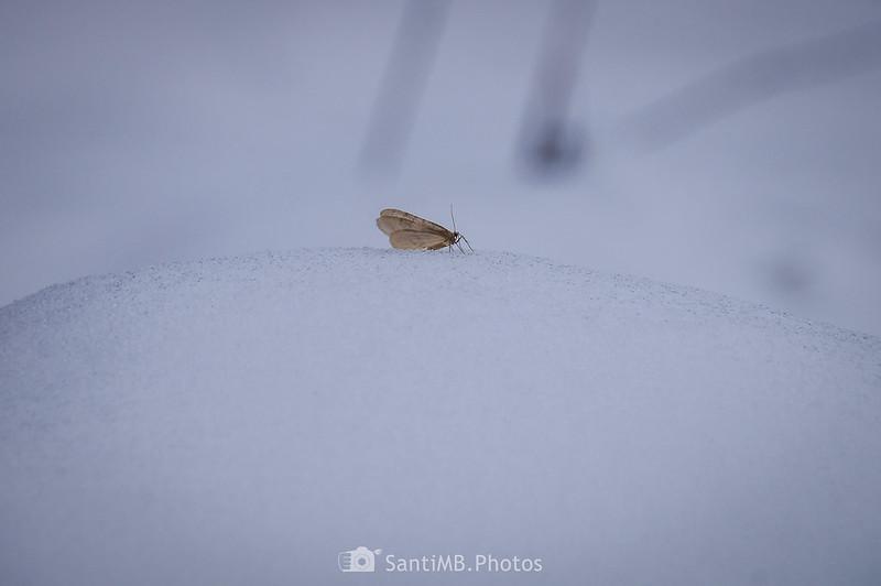 Pequeña mariposa sobre montículo de nieve