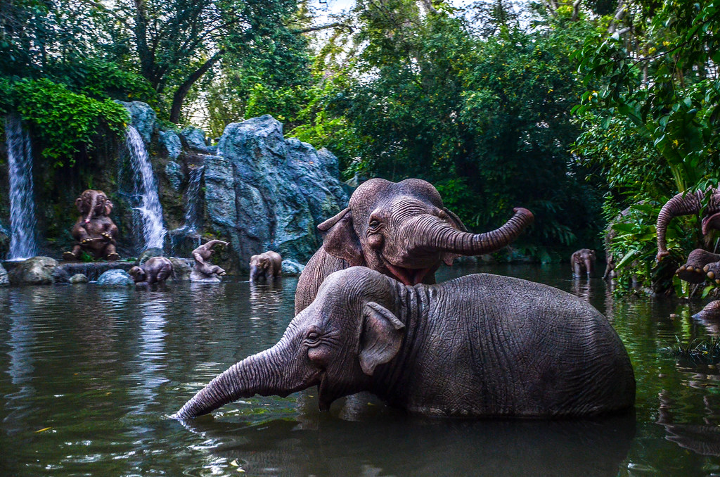 Elephant Pool Jungle Cruise MK