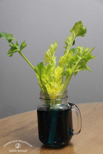 Celery Start | by Everyday Snapshot