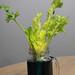 Celery Start