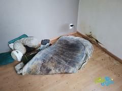 Schoonmaak na onopgemerkte dood / Lijkvinding 23 - Schoonmaakbedrijf Frisse Kater