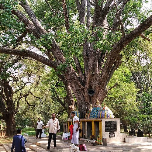 Stumbled upon this unexpected temple in Cubbon Park which seems to be logically dedicated to trees. #temple #hindu #tree #green #gardencity #bangalore #india | by Scalino