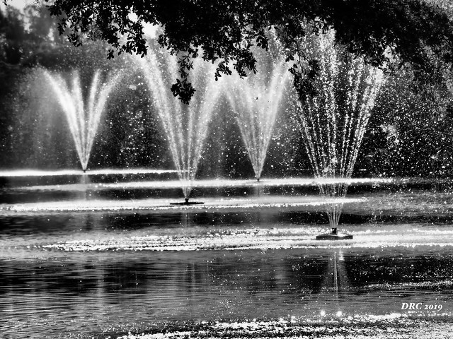 Fountains in Black and White