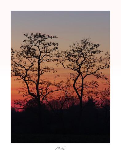 pocketworldiglandscapedreamspotsvisualheavenlandscapephotolandscapelovernatgeoadventureearthexperiencemthrworldmajesticearth tree silhouette horizon sky red orange rot sunset sonnenuntergang afterglow niefern öschelbronn niefernöschelbronn badenwuerttemberg badenwürttemberg germany deutschland february februar 2019
