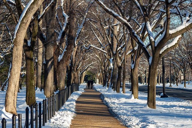 Path under snowy trees