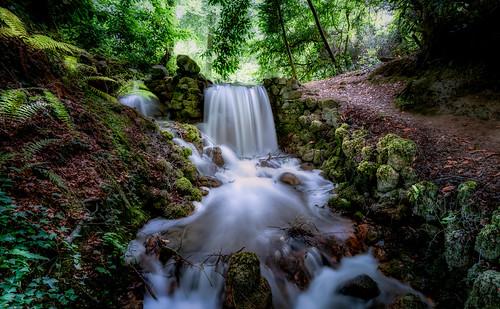 landscapes waterfall birr castle gardens fernery woods water longexposure motionblurr forest