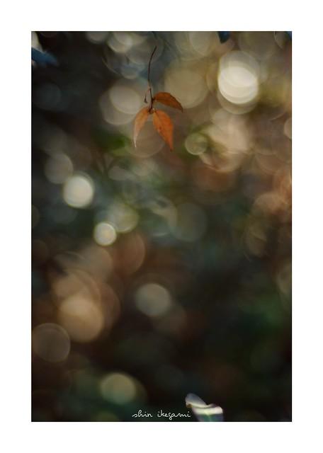 2019/2/17 - 20/24 photo by shin ikegami. - SONY ILCE‑7M2 / Carl Zeiss C Sonnar T* 1.5/50 ZM