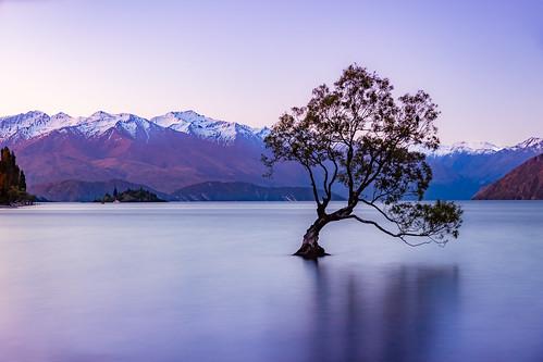 wanaka newzealand snow lonelytree landscape mountains