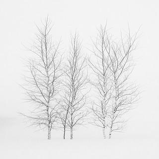 Winter Sonata - Hokkaido   by Hengki Koentjoro