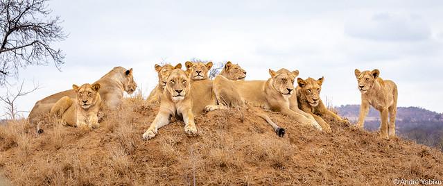 royal family - Kruger, South Africa