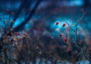 Winter Whispers   by miss.interpretations