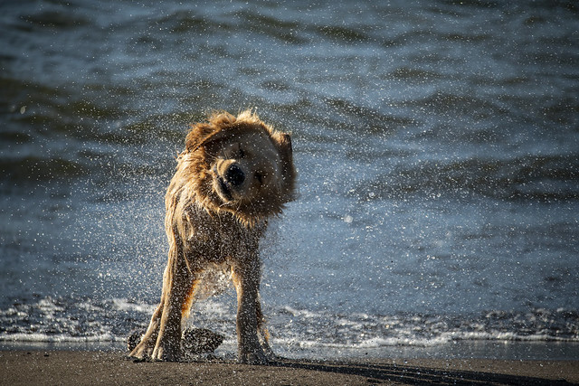 Dog Drying Off - Hood River Waterfront Park, Oregon