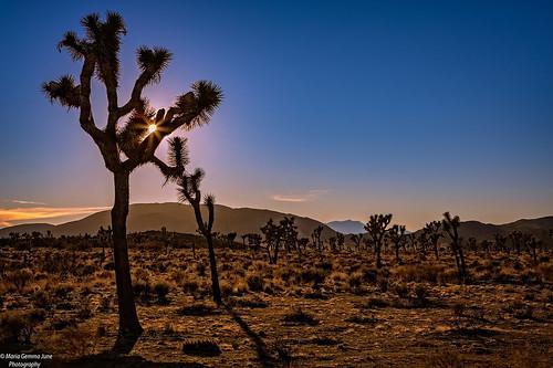 Joshua Tree National Park | by Maria Gemma - A Passionate Photographer
