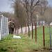 2019_04_02 conférence de presse installation de la clôture des autorités luxembourgeoises en guise de prévention contre la peste porcine africaine