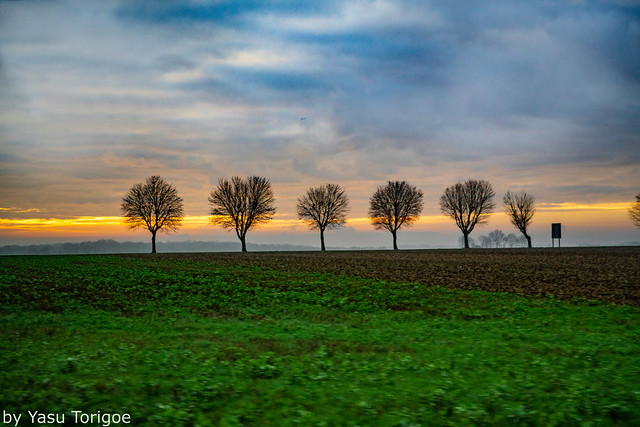 Viewing Silhouetted Trees by Sunrise on the French Landscape during Early Morning Bus Ride from Giverny to Auvers-sur-Oise, France-12a
