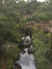 Kororoit creek #4