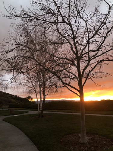 silhouette tree february colorful iphone8plus santaclarita sunset trees