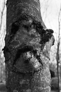 Found Faces, March 2019 FPoTY | by Harlequin565