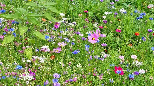 Blumenwiese bei Oberschönenfeld