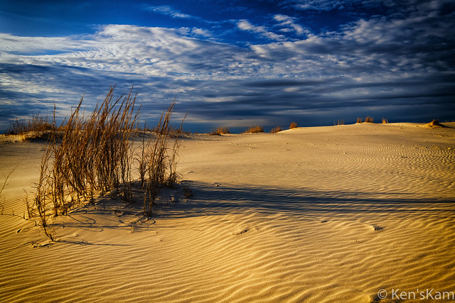 Late afternoon in the sandhills.