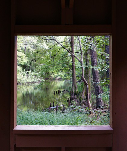 window cypress pines pine trees observation wildlife wild life pond water jesse h jones park nature center humble houston texas tx brush