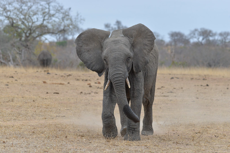 2246 Elephant