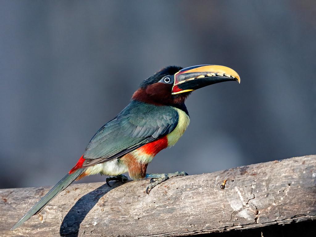 Pantanal_0553