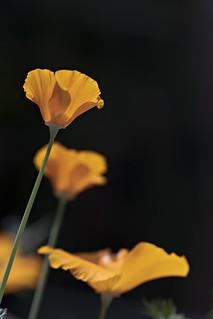 190406 In the garden _DEB0465 copy | by debunix