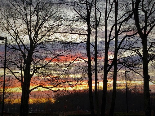 princeton newjersey nj sunrise winter cold nature outside trees